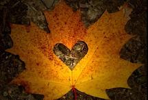 4 pory roku - Jesień