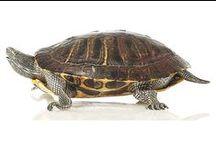 Tortoiseshell Objects / by YELIS