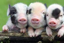 Cute doggies,piggies and bunnies