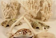 MY ...  SEASHELLS AND CORALS / by YELIS