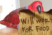 Avian Enrichment / Wild birds spend 6 to 18 hours a day looking for food.  Our pet birds, on the other hand, are fed from of a dish, which takes them only half an hour to eat their fill.  This leaves a lot of idle time for our avian friends to develop behavioral problems.  Try some of these captive foraging ideas to fill your pet's day with more natural feeding behaviors.