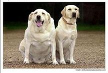 Fido Fitness / If your veterinarian has determined that your pet is carrying a few too many extra pounds, you're not alone! It's estimated that about 17 million dogs in the United States are overweight or obese, and those numbers are increasing.