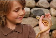Reptile Care / Learn how to properly care for your reptile at our website:  http://www.milwoodanimalclinic.com/Care-Sheets.html