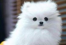 Too Cute