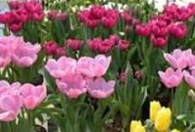 Spring Flowers Are Blooming at Esbenshade's Garden Centers! / Esbenshade's wholesale division grows a vast variety of gorgeous flowers for the spring season. Easter flowers will soon  be popping up in all 3 of our retail locations. Stop by and step into spring!