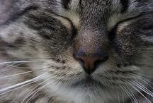 ANIMALS / Pets - funny - furry