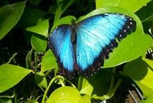 Butterflies / by Elaine Mote
