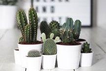 p l a n t e s / Regroupement d'astuces, de photos de plantes et de cactus.