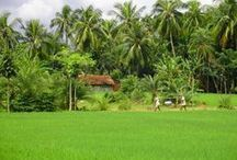 Welcome to Bangladesh  / Some of the real photo taken of the beauty of Bangladesh.