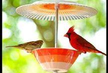 bird feedders