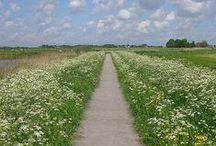 Fryslân, Friesland, Frisian / Myn heitelân. Hjir bin ik thús. Hier ben ik thuis. Here I am at home.