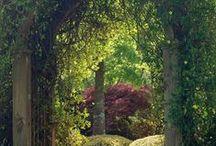 cottage garden / gardens