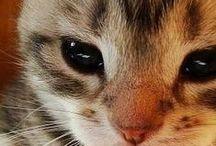 Kissat Cats (and a few others) / Kissan, ja vähän muidenkin eläinten, elämää, ruokintaa, terveydenhoitoa ja harrastuksia koskevia artikkeleita ja tietysti kuvia