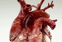 Anatomia Anatomy