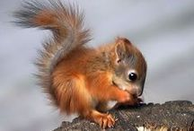 Squirrel Cuteness / All things squirrel-related! #squirrel #cute #animal