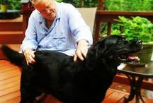 """We """"Heart"""" Black Pets! / A celebration of black and dark-furred pets, who typically have a harder time getting adopted. Let's give Black Pet Syndrome the boot!"""