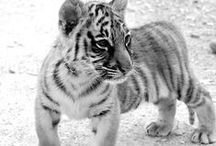 ♥Animals♥ / I love these pictures of animals. Do you also like them?