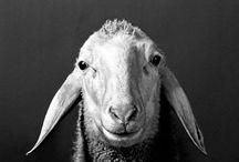 ANIMALS/ANIMAUX/TIERE / Dieren