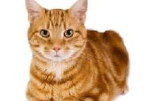CATS/CHATS/KATZEN / Katten