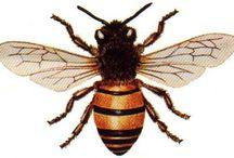 BEES/ABEILLES/BIENEN / BIJEN