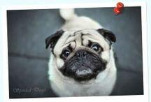 Spoiled Dogs Portfolio / Dog-Photography