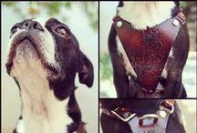 Harnesses / Dog harnesses