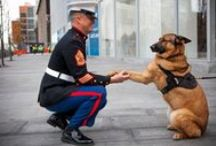 Four-Legged Heroes / Inspiring stories and photos of animal bravery and loyalty