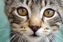 Love At First Meow / Meow-velous photos, quotes, and stories featuring our kitty companions
