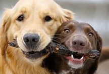 Barking Best Friends / Barking cute photos, quotes, and stories featuring man's best friend