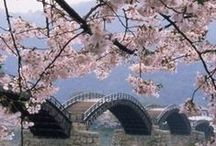 Japanese SAKURA(Cherry blossom) / by kouji