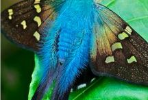 Насекомые (insects)