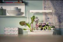 Jardinagem interior   IKEA Portugal / Água, luz e amor (por favor). É só o que precisam para ter uma horta em casa. Os nossos kits de cultivo no interior, unidades de cultivo e acessórios permitem-vos cultivar em qualquer espaço e em qualquer altura do ano. Produção mais local do que esta não há. #jardinagem #horta #IKEAPortugal / by IKEA Portugal