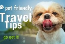 On the Road: Pet Travel Tips / Pet-friendly destinations and tips to make traveling with your pet a breeze