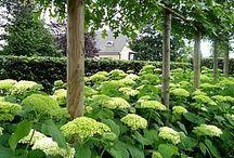 GARDEN PLANTS/PLANTES DE JARDIN/TUINPLANTEN