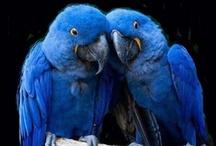 BLUE BIRD / by Erwin Pempelfort