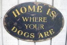 Coisas para cachorro