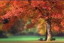 Mood ♥ Autumn / Nálada * Podzimní