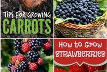 Garden ♥ Growing & Tricks ★ / Zahrada * Pěstování & Triky
