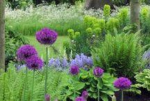 Garden ♥ Allium & Grass ★ / Zahrada * Česneky & Trávy