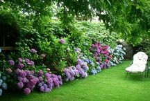Garden ♥ Hydrangena & Peonies ★ / Zahrada * Hortenzie & Pivoňky