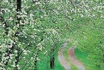 Mood ♥ Spring / Nálada * Jarní