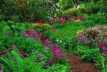 Garden ♥ Sched & Moss ★