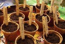 Garden ♥ Propagation & Seeds ★ / Zahrada * Pěstování & Semena