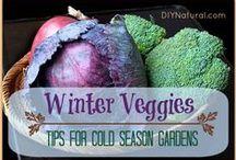 Garden ♥ Winter & Edible ★ / Zahrada * Zimní & Jedlá