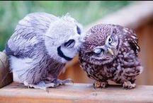 Animals ♥ Birds