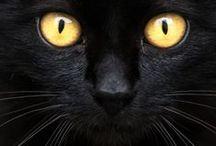 Cats  °Black°
