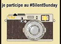 Silent Sunday / Chaque dimanche Mary du blog Londres pour les Enfants nous invite à partager sa photo du dimanche. Pas de thème imposé, juste partager un cliché sans un mot. C'est le Silent Sunday.