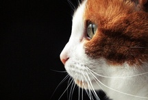 Animals :: Cats / by tocco
