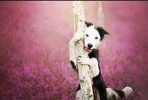 Sesiones fotográficas de animales / Sesiones con animales como protagonistas.