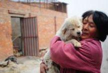 Historias de rescate / Increíbles rescates de animalitos en apuros o incluso, donde ellos mismos son los héroes =)